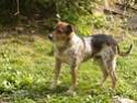 Pets Hpim0811