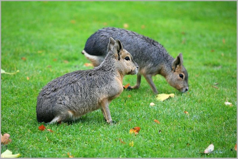 Sortie photo au Parc Paradisio le 05 octobre : Les photos 633910