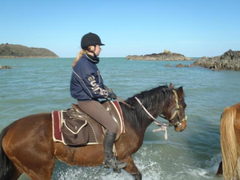 cherche cheval ou jument 30175510