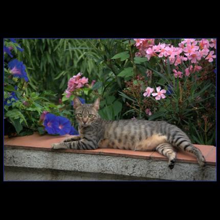 où est mon chat ? 68779_10