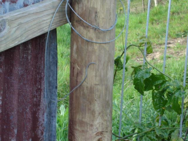My backyard Dsc06710