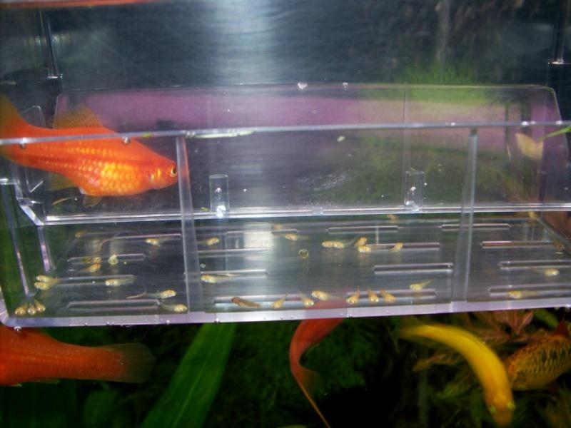 Aquariofilia 100_0910