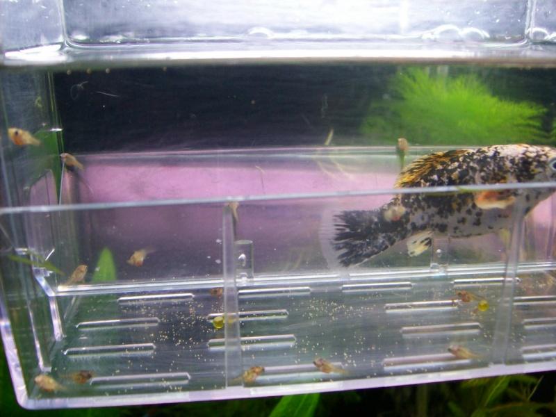 Aquariofilia 100_0911
