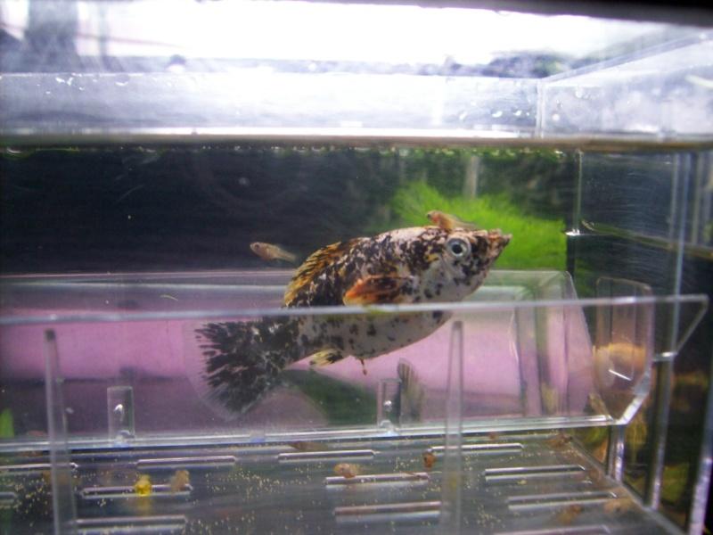 Aquariofilia 100_0913