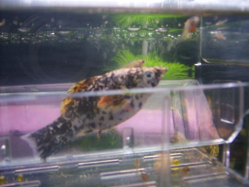 Aquariofilia 100_0915