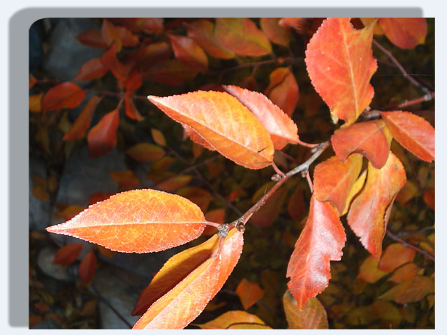Pic digital - صفحة 2 Drop-s11