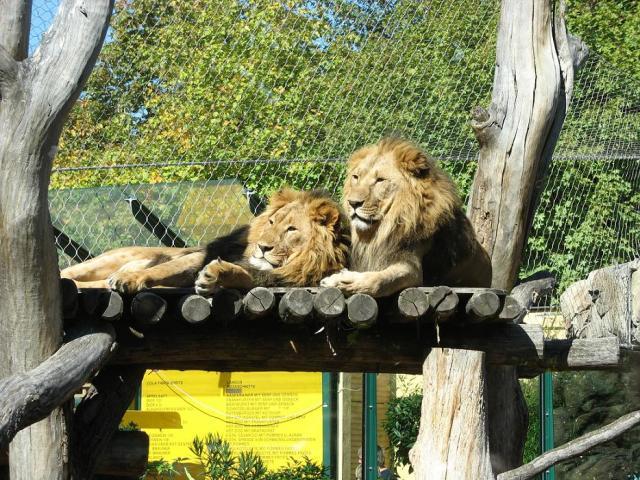 Зоопарк 12200110