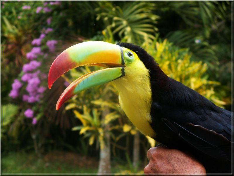 Quelques oiseaux El_tuc11