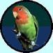 منتدى طيور الحب