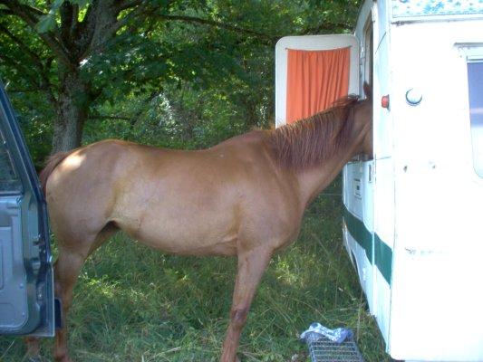 Les chevaux ! 23_7_212