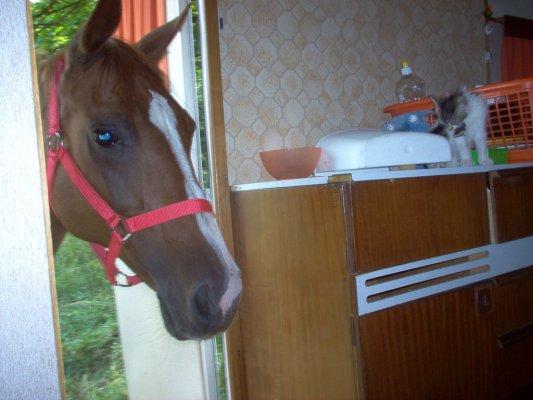 Les chevaux ! - Page 2 23_7_213