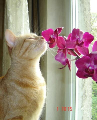 Au royaume des chats Dsc03110