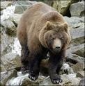 [Blog] Eirikr, marteaux de gromril Grizzl11