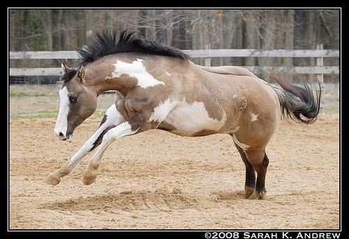 Black Hills Wild Horse Ranch Silver10