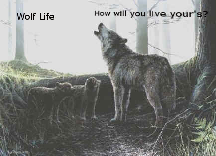 Wolf Life forum banners! Zpup310