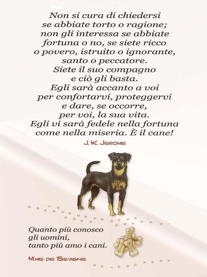 Benvenuto al cane e al gatto Cane11