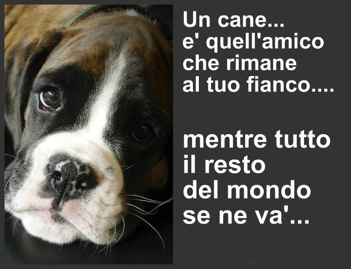 Benvenuto al cane e al gatto Cane12