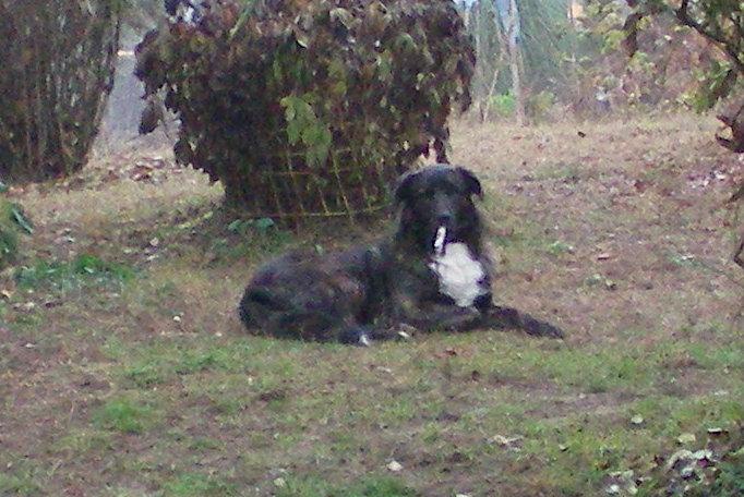 Benvenuto al cane e al gatto Igor_b10