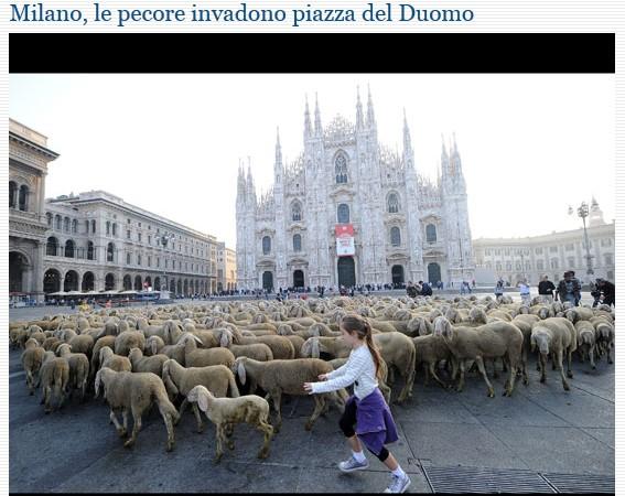 MILANO e dintorni..... Pecore10