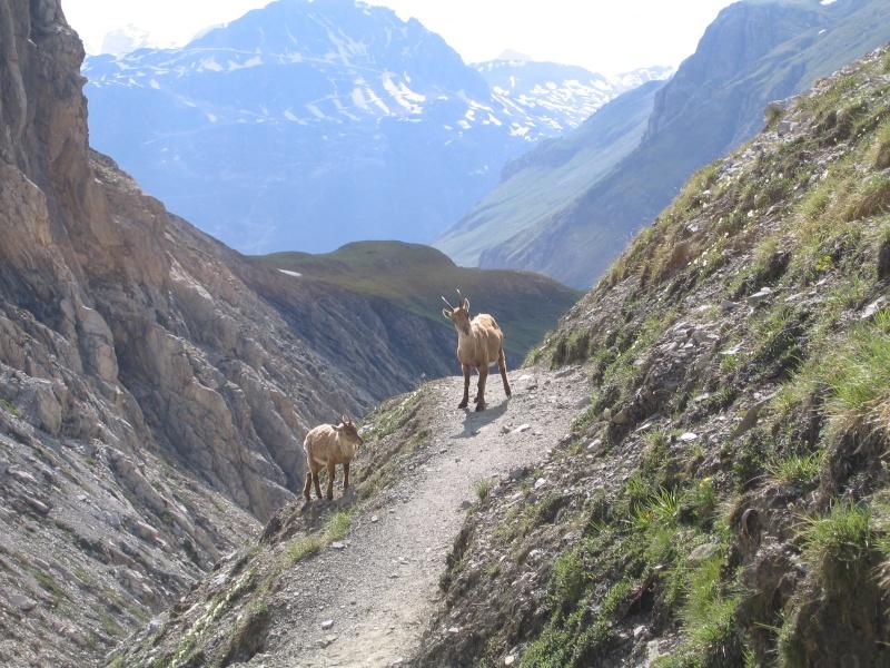 La faune en Haute-Tarentaise 20080610