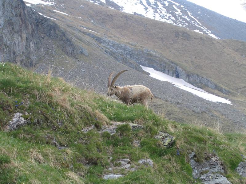 La faune en Haute-Tarentaise Photo010
