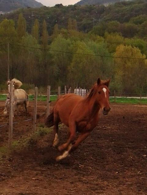 "Concours : ""cheval au galop"" GAGNANTE : TItâne - Page 2 52457711"