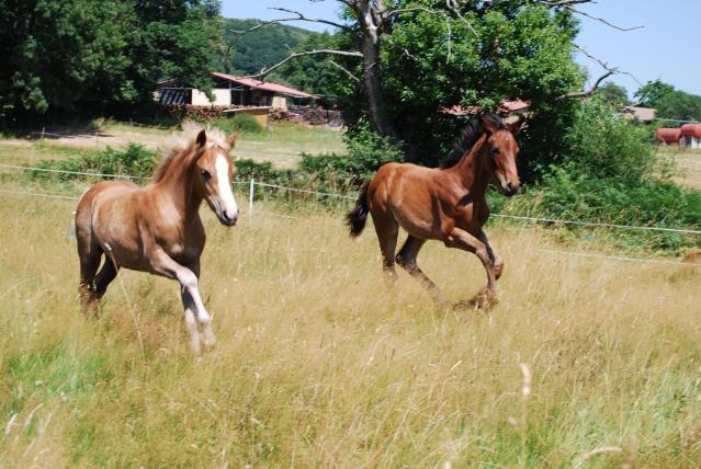 "Concours : ""cheval au galop"" GAGNANTE : TItâne Change10"