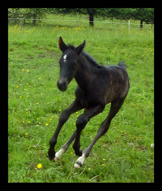 "Concours : ""cheval au galop"" GAGNANTE : TItâne 243"