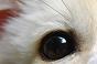 A qui appartient cet oeil ? - Page 5 Xx11