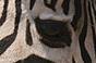 A qui appartient cet oeil ? - Page 5 Xx12
