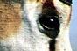 A qui appartient cet oeil ? - Page 5 Xx14