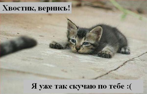 Прикольные картоночки))) X_054310