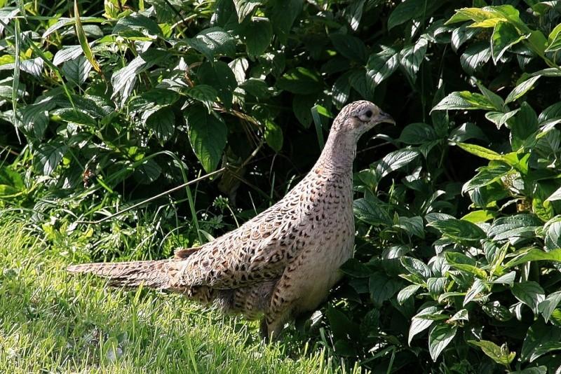 Oiseaux à identifier (2) Xsi_1510