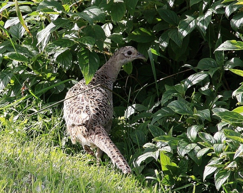 Oiseaux à identifier (2) Xsi_1512