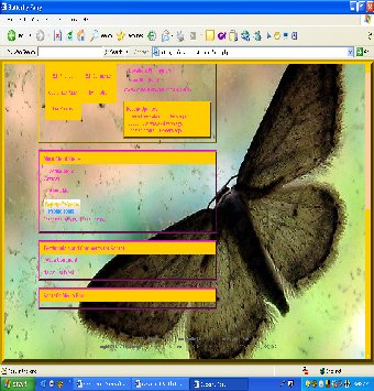 Butterfly Fairy Bt2-110
