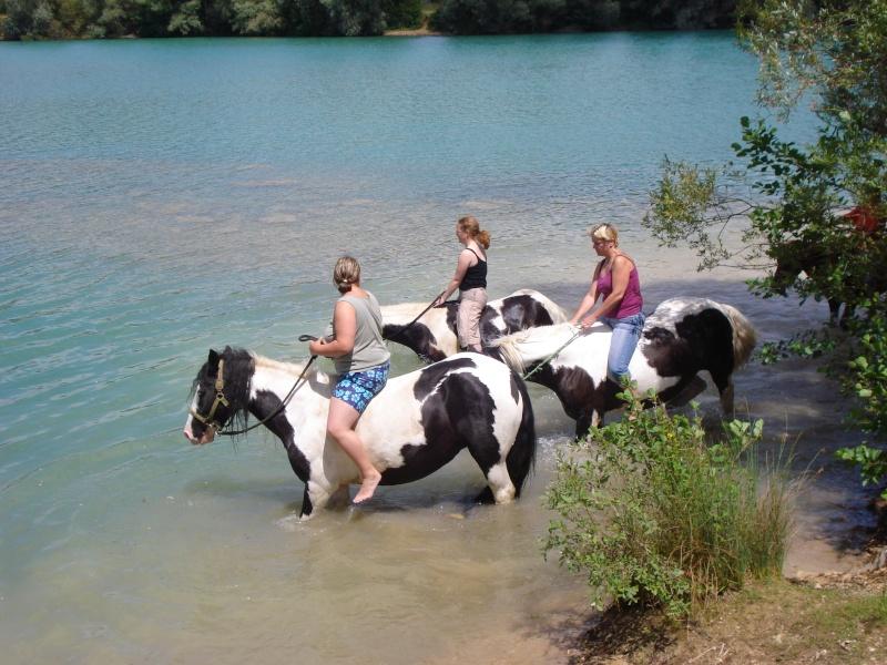 nos irish cob aiment nager !!!! Dsc02815