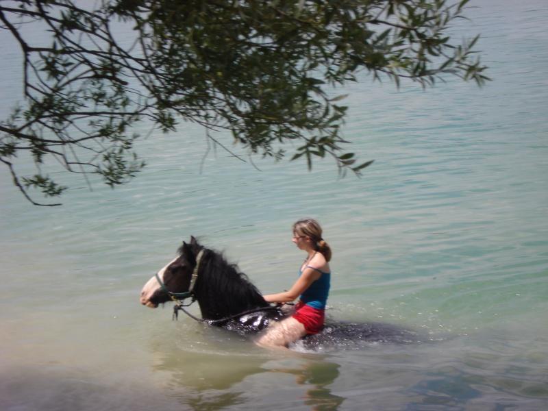 nos irish cob aiment nager !!!! Dsc02816