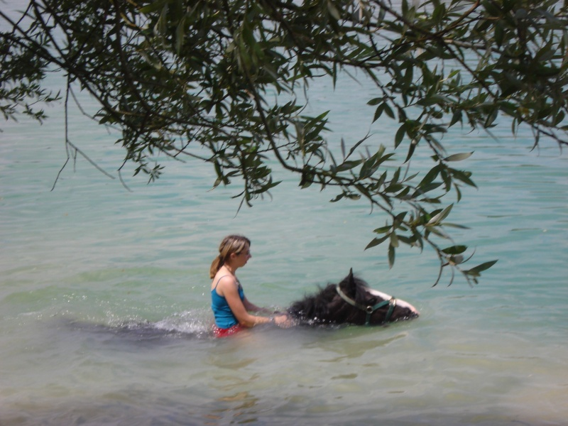 nos irish cob aiment nager !!!! Dsc02817