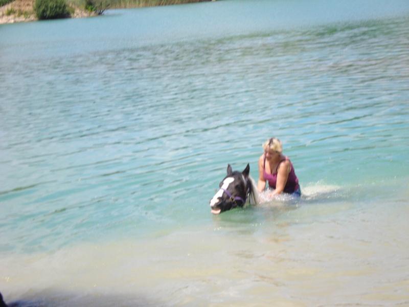 nos irish cob aiment nager !!!! Dsc02818