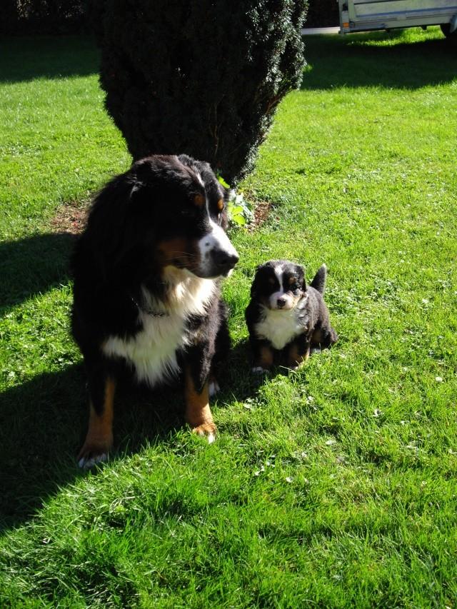 Baya et Alf : 12 septembre 2011 - Page 2 Imgp3711