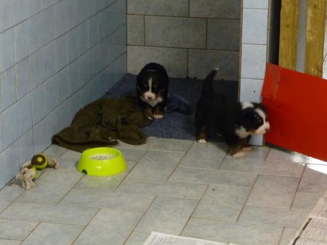 Baya et Alf : 12 septembre 2011 - Page 2 P1050618