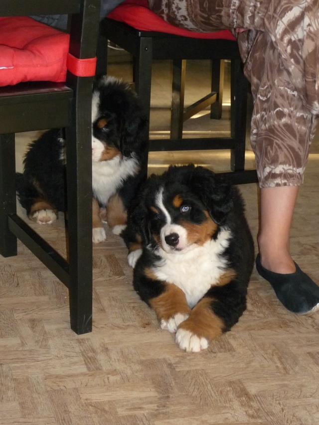 Baya et Alf : 12 septembre 2011 - Page 2 P1050816