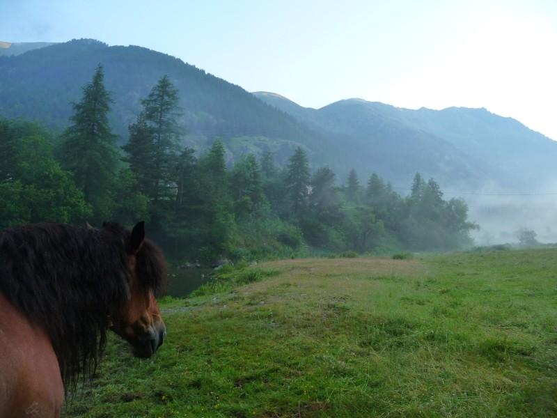 Concours Photo Juillet : Quand Cheval rime avec Poésie... P1060512