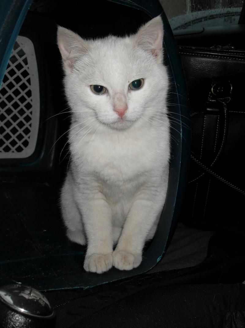 Halma, chatonne de 2 mois environ adoptée  par LAETITIA (85) Sdc12944