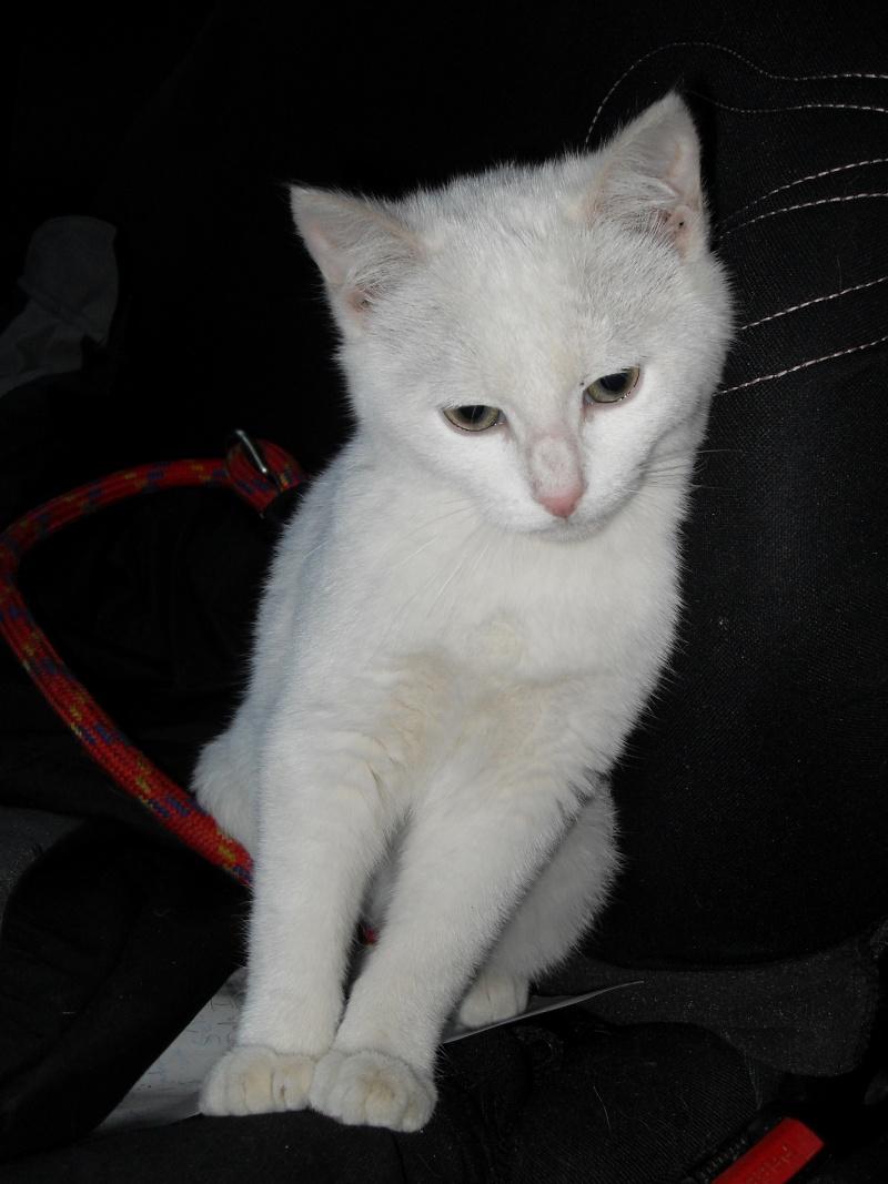Halma, chatonne de 2 mois environ adoptée  par LAETITIA (85) Sdc12949