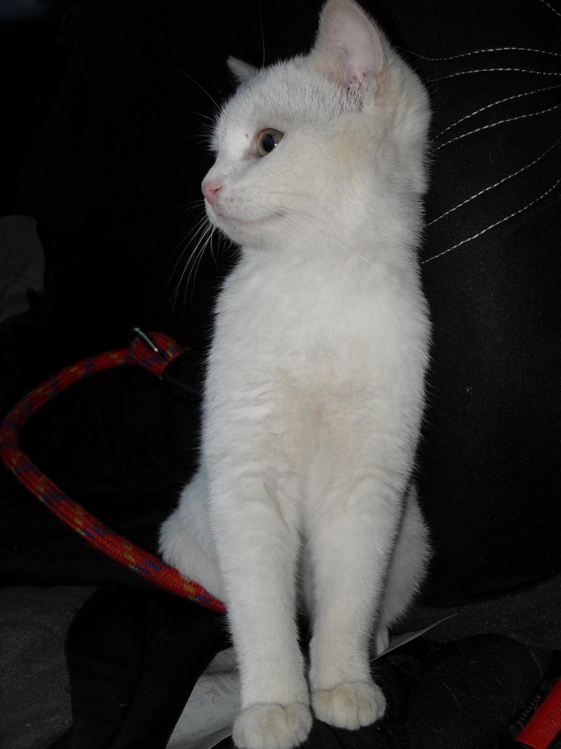 Halma, chatonne de 2 mois environ adoptée  par LAETITIA (85) Sdc12950