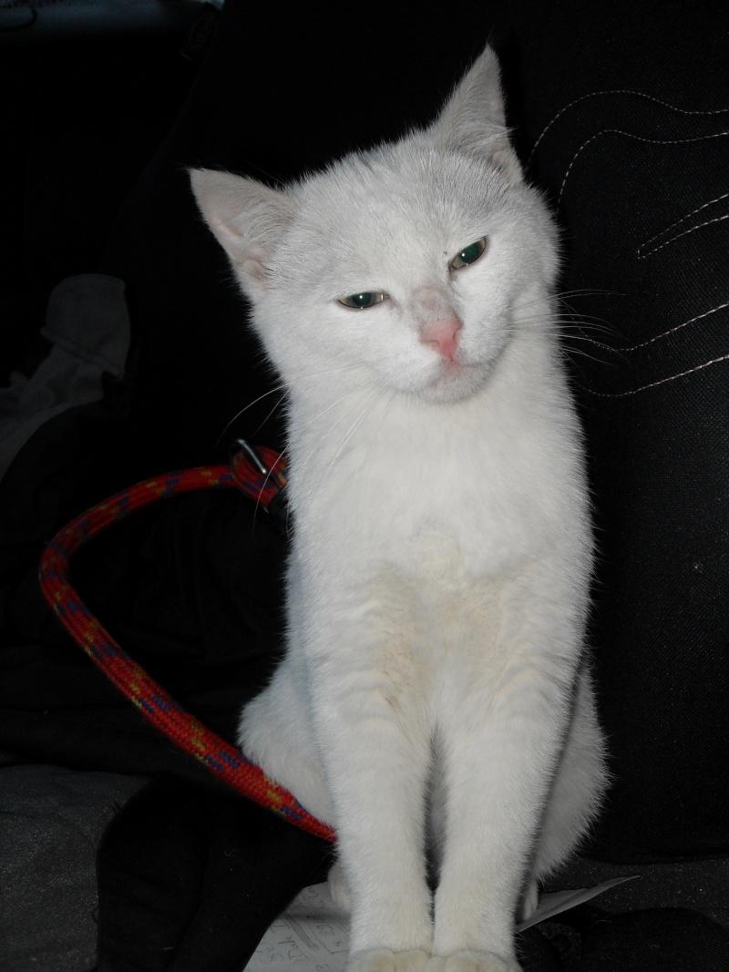 Halma, chatonne de 2 mois environ adoptée  par LAETITIA (85) Sdc12951