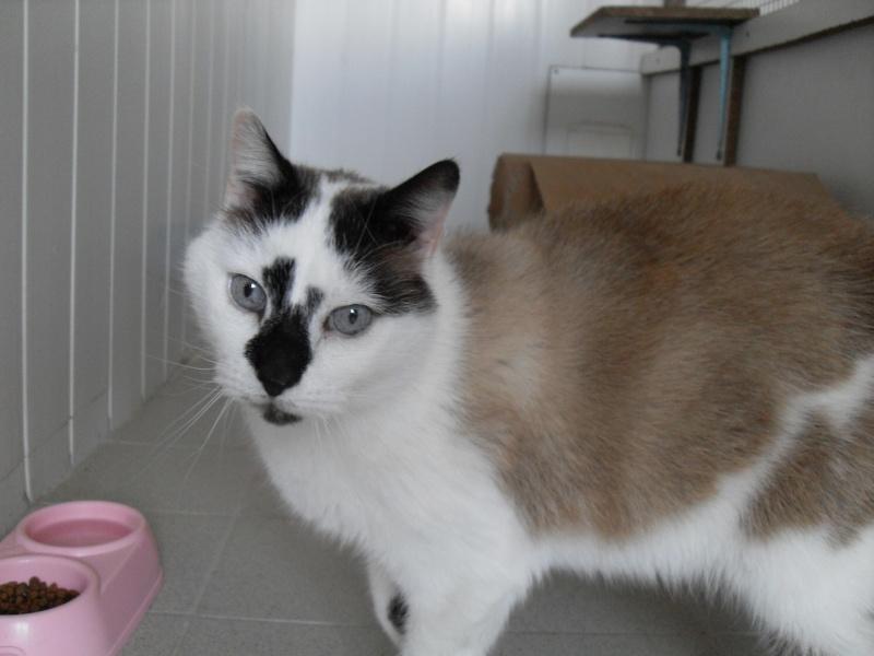 FELIX  CHat male en fourrière né  29/09/2004  adopté par LA CHATAIGNERAIE (37) Sdc13479