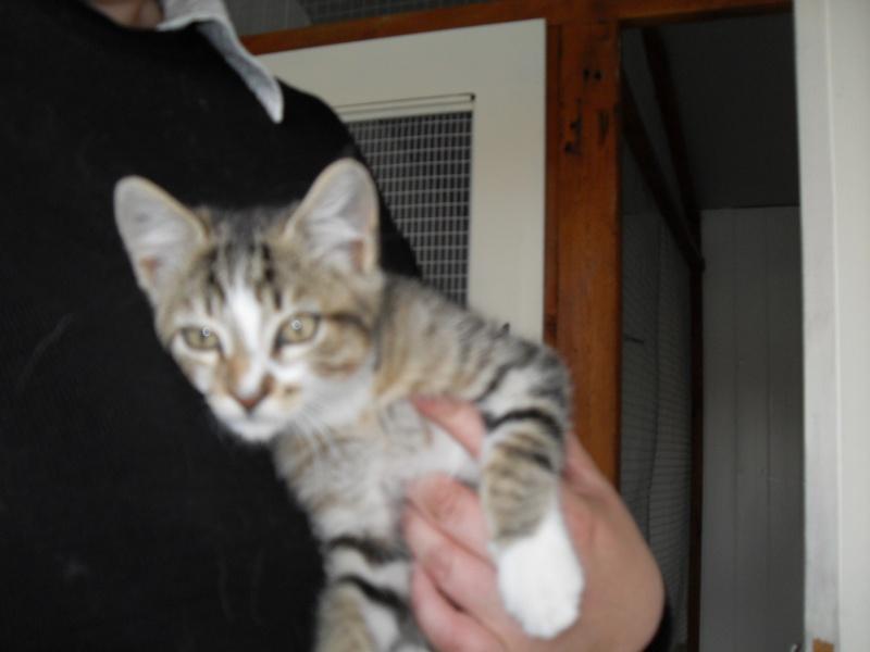 Hadès, chaton tigré et blanc né le 11/05/2012  par NADINE (36) Sdc14926