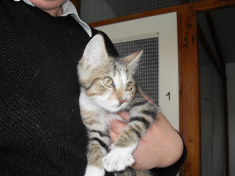 Hadès, chaton tigré et blanc né le 11/05/2012  par NADINE (36) Sdc14927